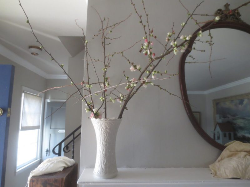 Quince branches are both sculptural and delicate.
